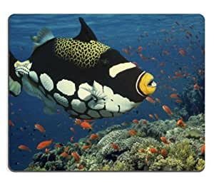Bigspotted Clown Triggerfish Tropical Ocean Mouse Pads Customized Made to Order Support Ready 9 7/8 Inch (250mm) X 7 7/8 Inch (200mm) X 1/16 Inch (2mm) High Quality Eco Friendly Cloth with Neoprene Rubber Luxlady Mouse Pad Desktop Mousepad Laptop Mousepads Comfortable Computer Mouse Mat Cute Gaming Mouse pad