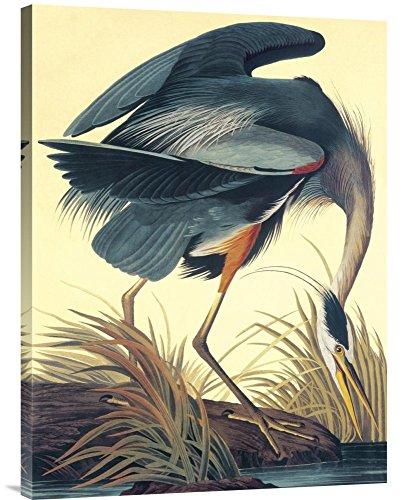 Global Gallery GCS-132742-2432-142 John James Audubon Great Blue Heron Gallery Wrap Giclee on Canvas Print Wall Art from Global Gallery