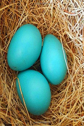 Journal Three Blue Robin Eggs Bird's Nest: (Notebook, Diary, Blank Book) (Nature Photo Journals Notebooks Diaries) PDF