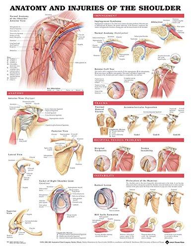 "Injuries of the Shoulder, DeuPair 20x26"" Pocket Frame Human Anatomy Poster"