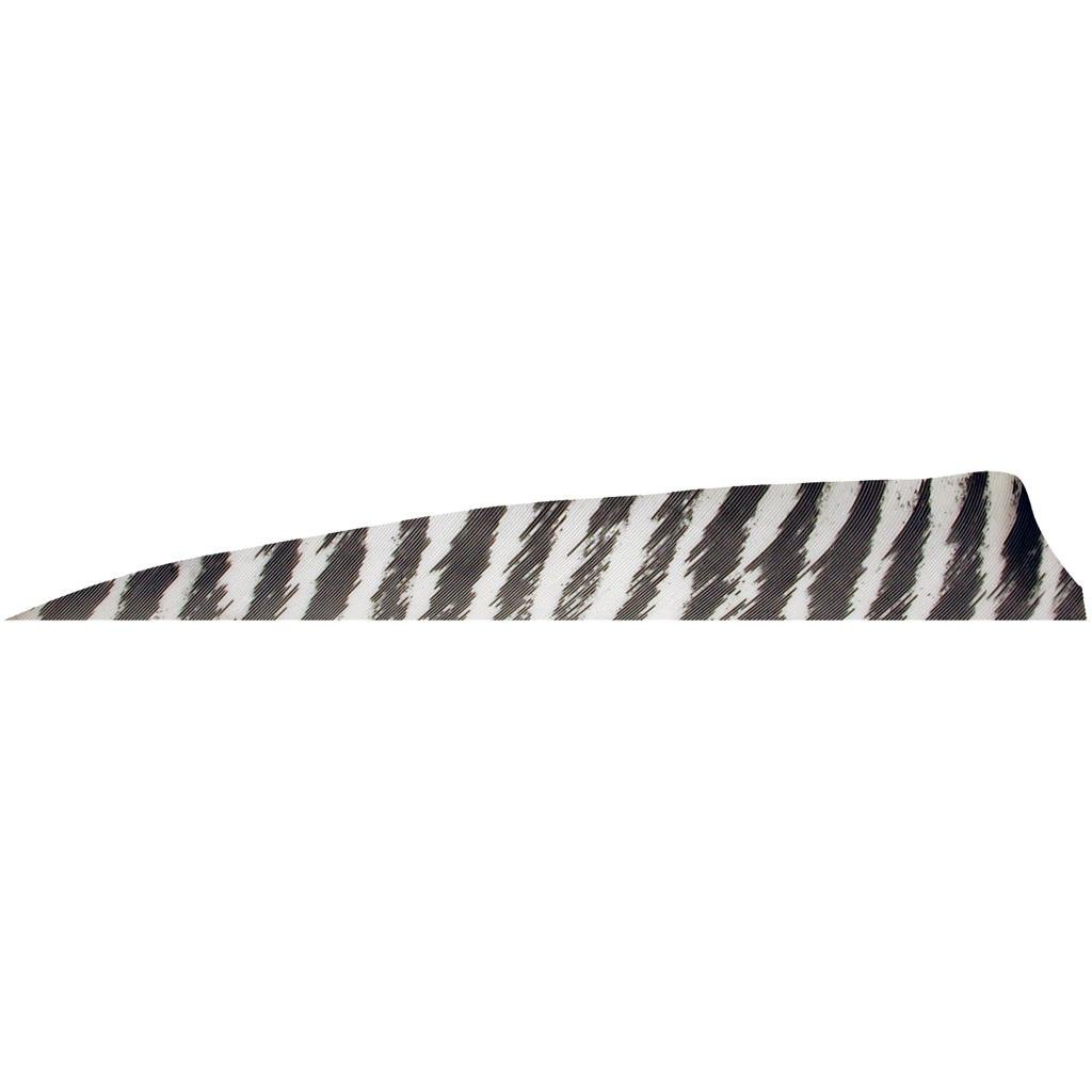 GATEWAY FEATHERS 4IN SHIELD RW BR WHT 100CT