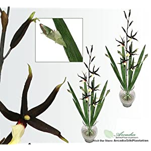 "TWO 39"" Gongora Orchid Artificial Silk Flower Bendable Sprays with Iris leaves 88"