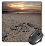 Best 3dRose Turtle Beach Mouse Pads - 3dRose LLC 8 x 8 x 0.25 Inches Review