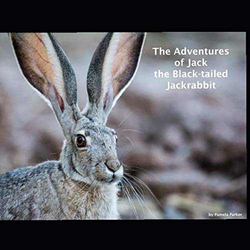 The Adventures of Jack the Black-tailed Jackrabbit Black Tailed Jack Rabbit