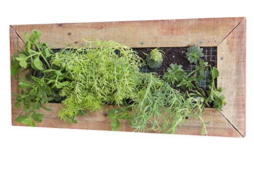 (Planter Box - Wooden - Wall Mounted - Rectangular - Vertical Garden - Wenge)