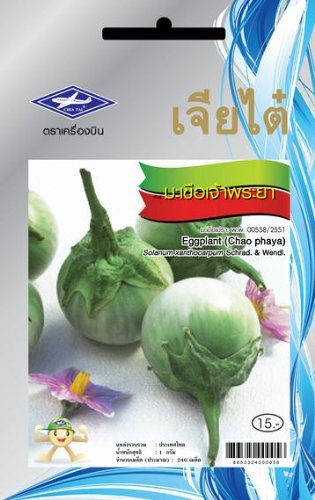 Thai Eggplant (Chao Phaya Eggplant (240 Seeds) Seeds - 1 Package From Chai Tai, Thailand)