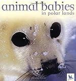 Animal Babies in Polar Lands, Jennifer Schofield, 0753457555