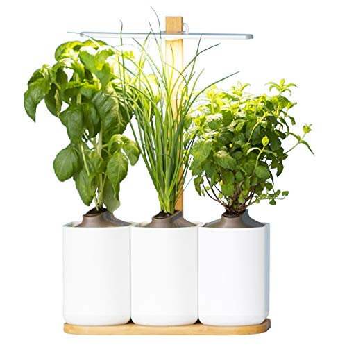 Lilo-le-potager-dintrieur-autonome-de-Prt--Pousser-Nouvelle-Generation-Cultivez-toute-lanne-simplement-Inclus-Basilic-Menthe-et-Ciboulette