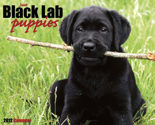 Just Black Lab Puppies - 8