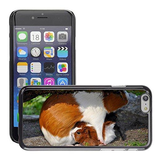 """Bild Hart Handy Schwarz Schutz Case Cover Schale Etui // M00135118 Meerschweinchen Haustier Nager // Apple iPhone 6 PLUS 5.5"""""""