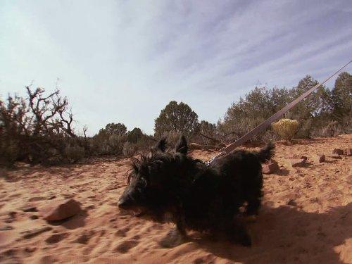 New Beginnings (Scotty Dog Mix)