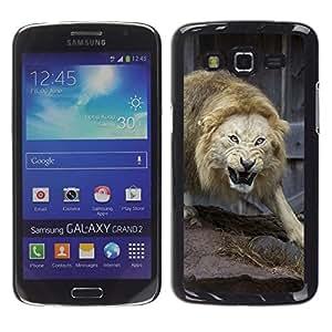Stuss Case / Funda Carcasa protectora - Angry Fight Lion Nature Animal King - Samsung Galaxy Grand 2 SM-G7102 SM-G7105