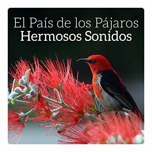 El País de los Pájaros (Hermosos Sonidos, Música para ...
