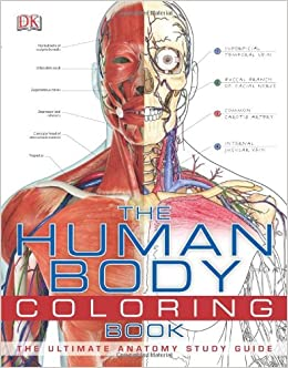 Amazoncom The Human Body Coloring Book 8589097777771 DK