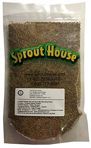 Mustard House - The Sprout House HOT and Spicy 1 Pound Certified Organic Non-gmo Sprouting Seeds Yellow Mustard and Red Radish