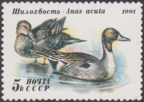 (1991 Northern Pintail Duck 5k CCCP Russia Unused Postage Stamp)