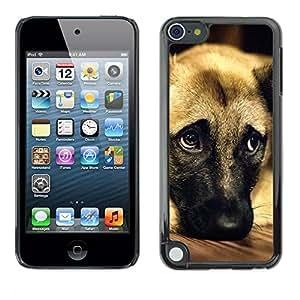 Vortex Accessory Carcasa Protectora Para Apple Ipod Touch 5 - German Shepherd Dog Anatolian Pet -