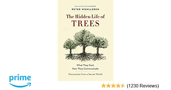 Amazon com: The Hidden Life of Trees: What They Feel, How