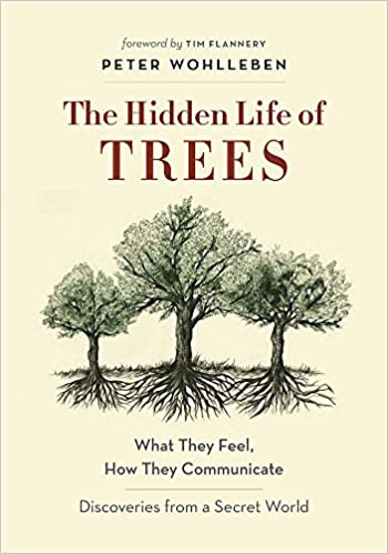 Amazoncom The Hidden Life Of Trees What They Feel How They