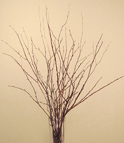 Green Floral Crafts Small Birch & Beech Branches 2-2.5 Feet Tall, Pack of 18 - Natural