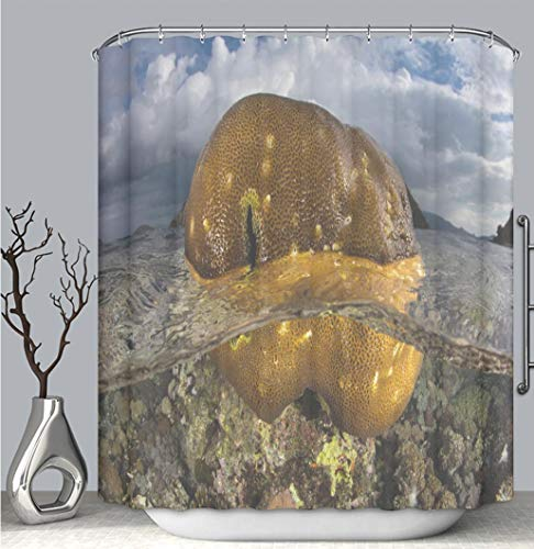 BEICICI Color Shower Curtain Liner Anti-Mildew Antibacterial, Coral Colony Out of The Water at Low Tide Multi-Color,Custom Shower Curtain Bathtub Bathroom Accessories.