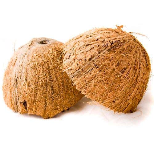 Shell Coconut Half (Two Coconut Shell Halves)