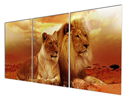 Gardenia Art - Animal World Series Wild Lioness and Lion Can