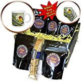 3dRose KIKE CALVO Bird Watching and Ornithology - Colorful Red-Headed Barbet Mosaic - Coffee Gift Baskets - Coffee Gift Basket (cgb_299452_1)