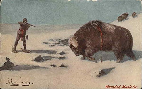 Wounded Musk-Ox, Musk Ox Shot by Hunter Other Animals Original Vintage Postcard from CardCow Vintage Postcards