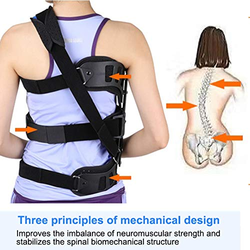 HKKSDM Adjustable Back Posture Corrector Back Support Scoliosis Spinal Auxiliary Orthosis Belt Corset for Back Postoperative Recovery by HKKSDM
