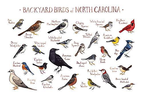 Backyard Birds of North Carolina Field Guide Art Print