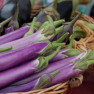 Millionaire Purple Hybrid Eggplant Garden Seeds - Non-GMO, Vegetable Gardening Seed - Egg Plant