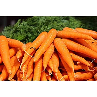 Danver Carrot Seed, Vegetable Seed, Garden Seed (1/4 Oz.) : Garden & Outdoor