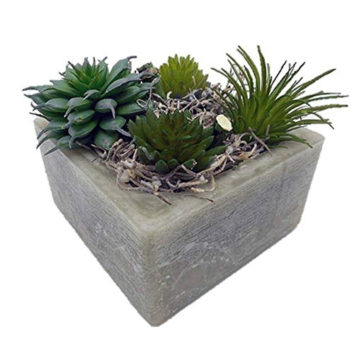 Habersham Candle Co. Sage Brush Succulent GEO Cube for sale  Delivered anywhere in USA