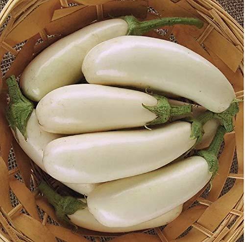 David's Garden Seeds Eggplant Snowy SL7542 (White) 50 Non-GMO, Open Pollinated Seeds