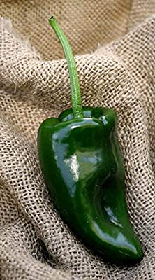 Poblano Ancho Chile Mexico Heirloom Pepper Premium Seed Packet + More