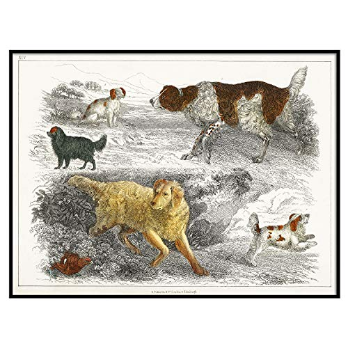 Dogs Print, Antique Animal Painting, Vintage Drawing Poster Wall Art Decor, Dog Collection, Farmhouse Prints, Antique Art | C247 16x20