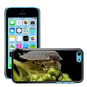 Hot Style Cell Phone PC Hard Case Cover // M00114838 Armadillo Worm Bug Insect // Apple iPhone 5C