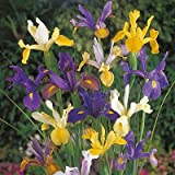 Dutch Iris Mix 30 Bulbs