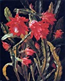 Art Oyster Christian Juel Mollback Cactus with Scarlet Blossoms - 20.1'' x 25.1'' 100% Hand Painted Oil Painting Reproduction