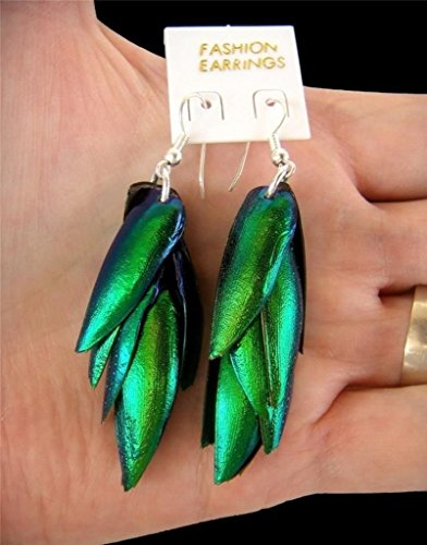 These Earrings Measure - Jewel Beetle Bug Insect Wings Iridescent Blue Green Earrings New