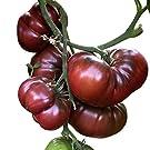 Tomate - Black Krim 10 Samen