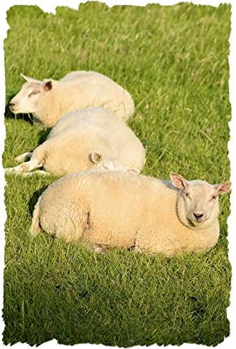 Home Comforts LAMINATED POSTER Three In A Row Animals Poster