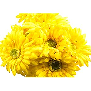 CraftMore Yellow Colored Gerbera Daisy Stems 14 Inch Set of 12 44