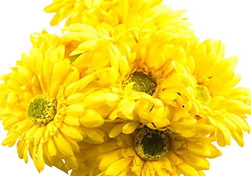 CraftMore Yellow Colored Gerbera Daisy Stems 14 Inch Set of -