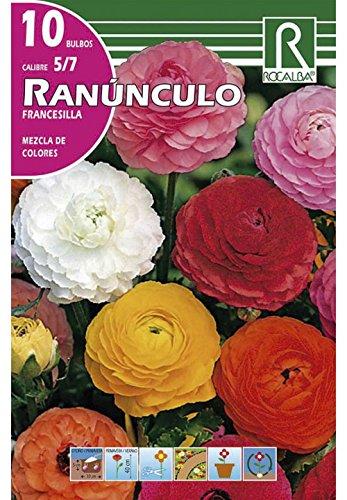 RANUNCULO FRANCESILLA MEZCLA DE COLORES - 10 BULBOS ROCALBA