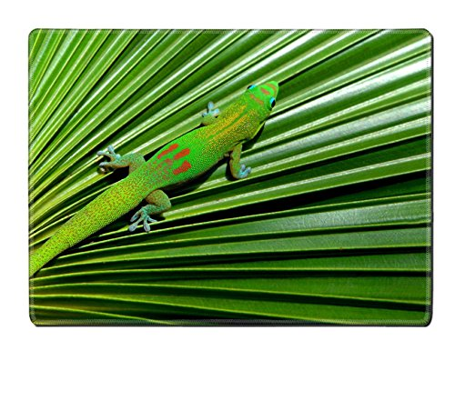 [MSD Placemat Image ID 24409084 Colorful gecko with blue eyes and webbed feet hides on the pleated surface of a palm frond Big Island Hawaii] (Palm Frond Placemat)
