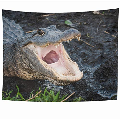 (Ahawoso Tapestry 90x60 Inch Mouth Pink Aliigator Alligator Open Wide Everglades Reptile Gator Florida American Eyes Design Tapestries Wall Hanging Home Decor for Living Room Bedroom Dorm)
