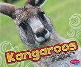 Kangaroos (Australian Animals)