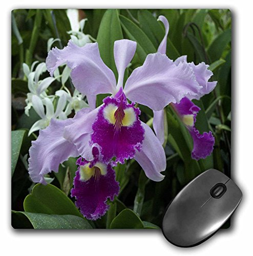 3drose-llc-8-x-8-x-025-inches-mouse-pad-orchid-mp-3355-1